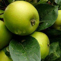 Ce se întâmplă dacă mănânci mere verzi pe stomacul gol?