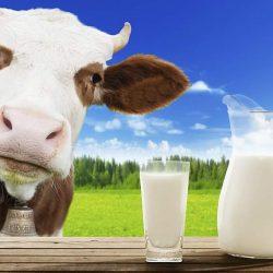 Cele mai periculoase alimente din lume! Majoritatea sunt interzise! (XIV) - Laptele cu caragenan