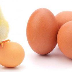 E bine să păstrezi ouăle în frigider?