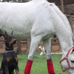 Prietenia dintre un câine și calul stăpânului său nu cunoaște limite [VIDEO]