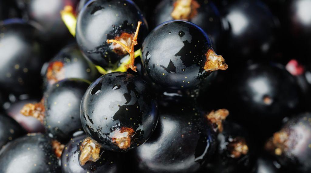 beneficiile-sucului-de-coacaze-negre